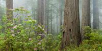 Damnation Creek Fog print