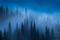 Foggy Trees print