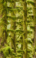 Mossy Trees print