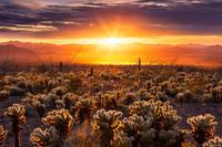 Cholla Sunset print
