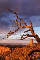 Desert View Watchtower  print