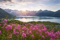 Glacier Bay Wildflowers print