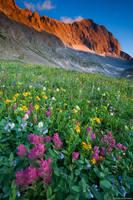 Capitol Peak Wildflowers print
