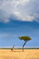 Giraffe and Tree print