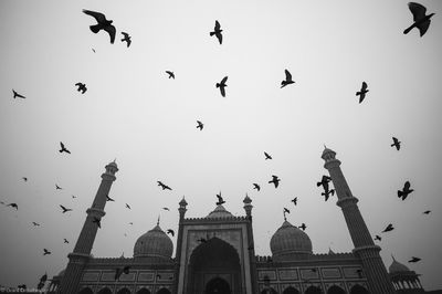 pigeon, mosque, new, delhi, india, jama, masjid, foggy, birds, flying