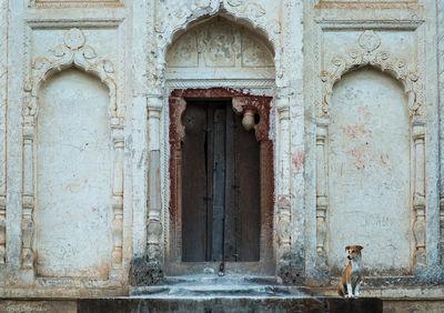 temple, dog, khajuraho, india, stray, entrance, lakshmana