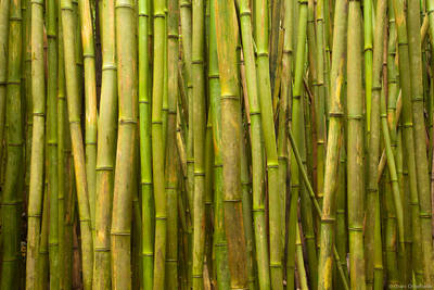 bamboo, forrest, haleakala, national park, maui, hawaii, thick, road to hana,