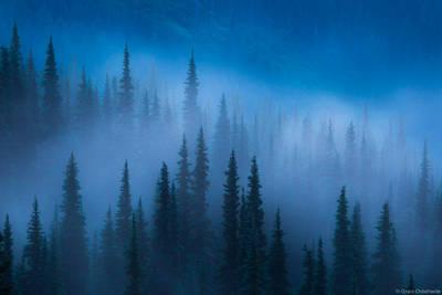 foggy, trees, olympic, national, park, usa, washington, fog, lifts, hurricane, ridge,
