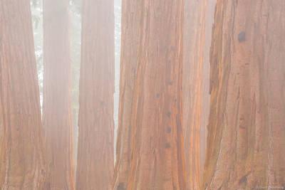sequoia, fog, kings, canyon, national, park, california, usa, trees