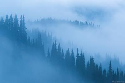 olympic, fog, national, park, washington, usa mist, trees, hurricane, ridge,