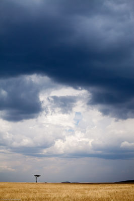 storm, mara, over, brooding, clouds, vast, expanse, masai, kenya, africa