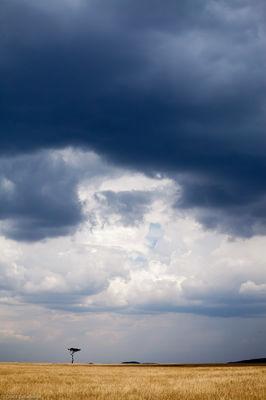 storm, mara, over, brooding, clouds, vast, expanse, masai, kenya, africa