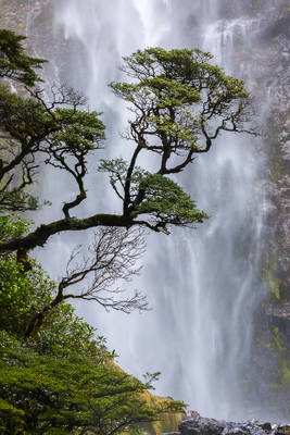 punchbowl, falls, arthur's, pass, new, zealand, lone, tree, devils, south, island,