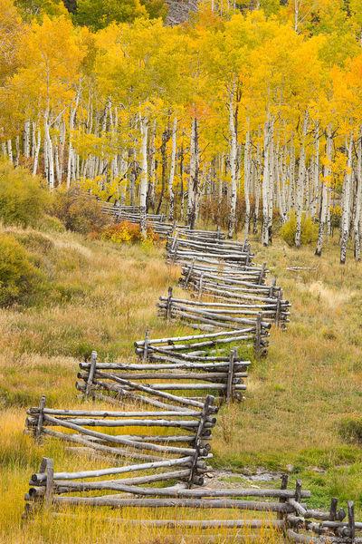 aspen, fence, telluride, colorado, old, split, rail, autumn
