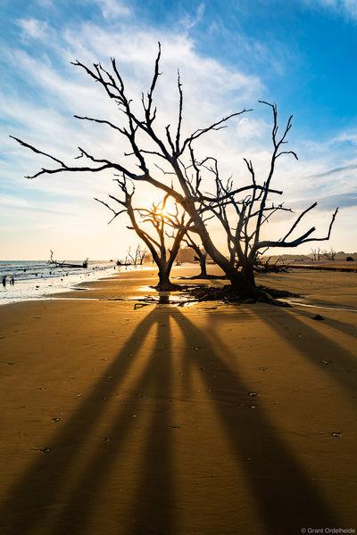 beach, skeletons, edisto, island, south carolina, dead, trees,