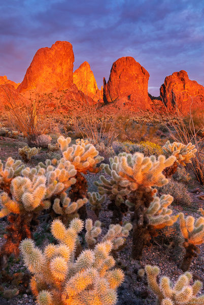 kofa, sunset, arizona, national, wildlife, refuge, cholla, cactus, garden