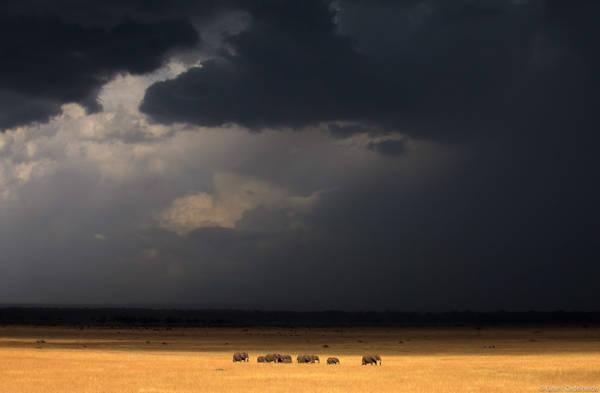 elephants, herd, rain, storm, masai, mara, kenya, africa, torrential, storm
