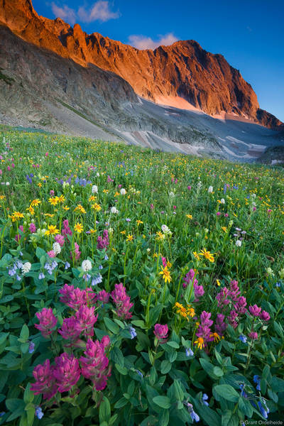 capitol peak, wildflowers, snowmass, colorado, fields, amazing maroon, bells, wilderness