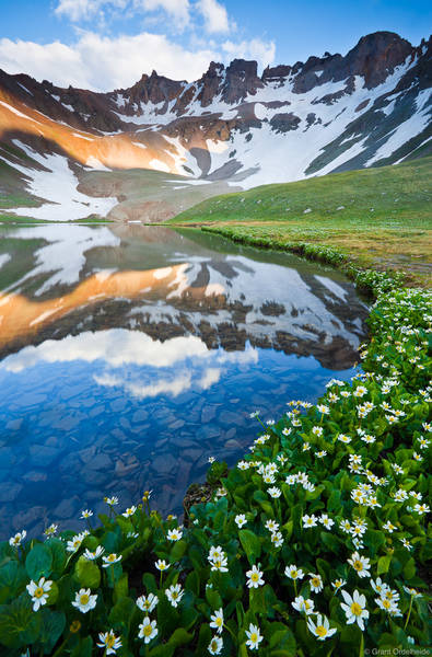 upper, blue, lakes, mount, sneffels, wilderness, colorado, ouray, marsh, marigolds, blooming, basin
