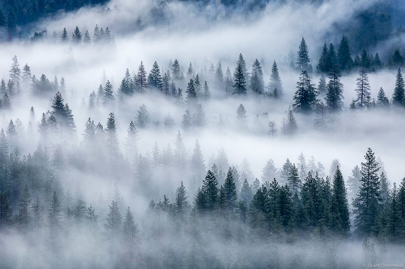valley, fog, yosemite, national park, california, trees