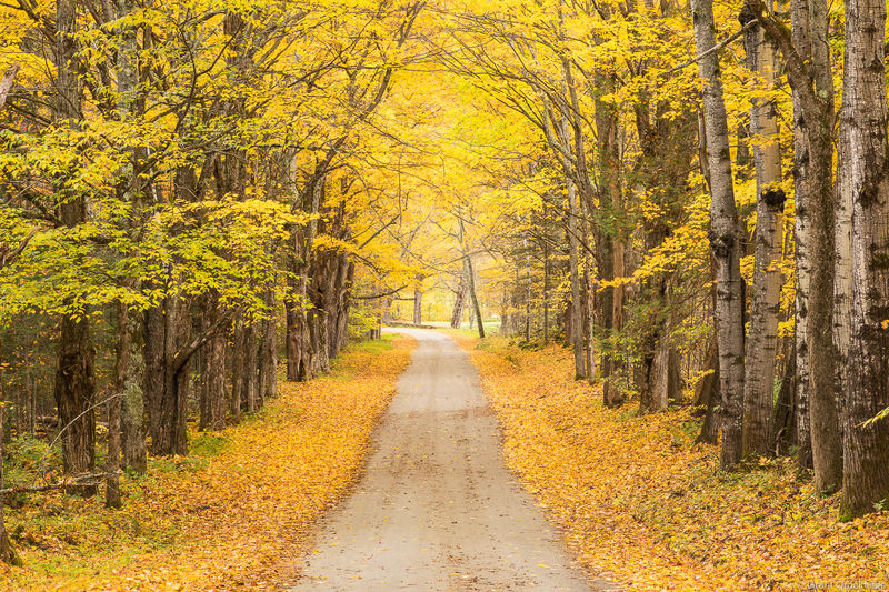 yellow, road, montpelier, vermont, rural, road, colorful, fall, foliage