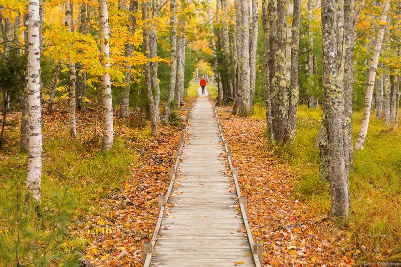 acadia, boardwalks, national, park, main, person, walking, autumn, foliage,