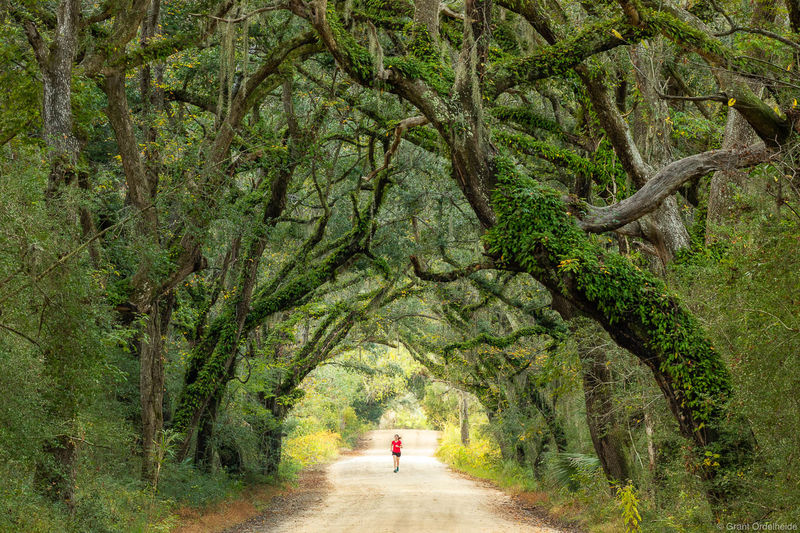 botany, bay, runner, edisto, island, south carolina, woman, running, remote, road, old, growth, forest