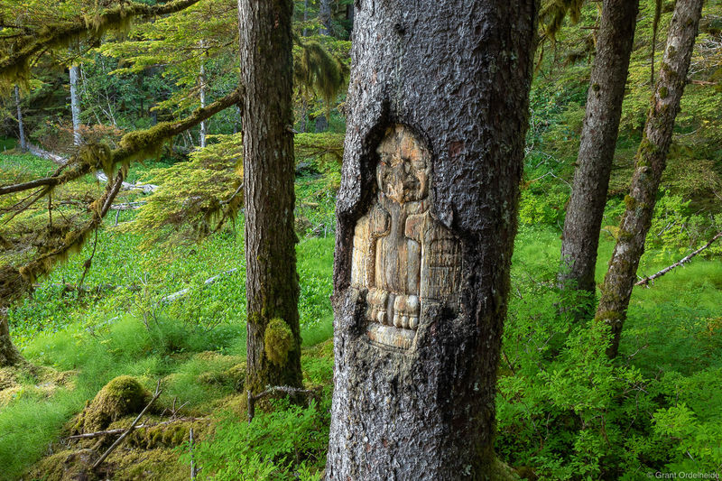 Tlingit Tree Carving