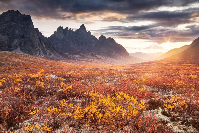 autumn, tundra, tombstone, territorial park, yukon, colorful, fall, mountain, canada