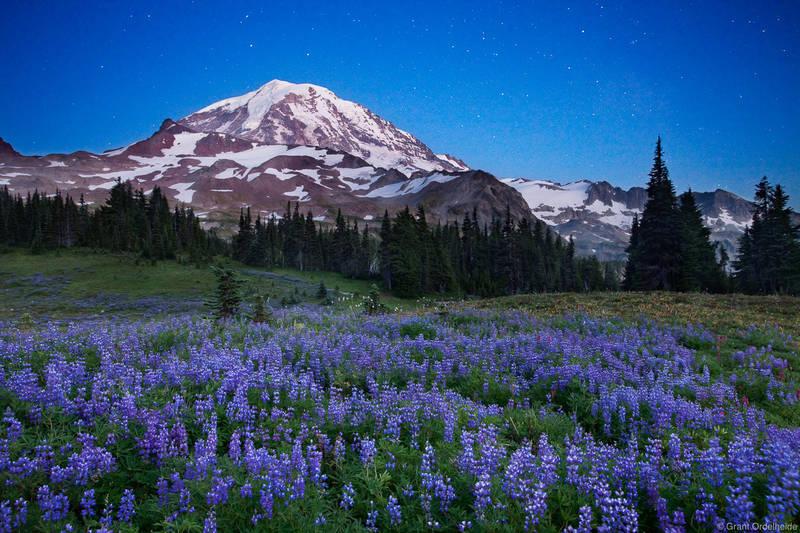 twilight, stars, evening, spray park, mt. rainier, national park, washington, peaceful, lupine