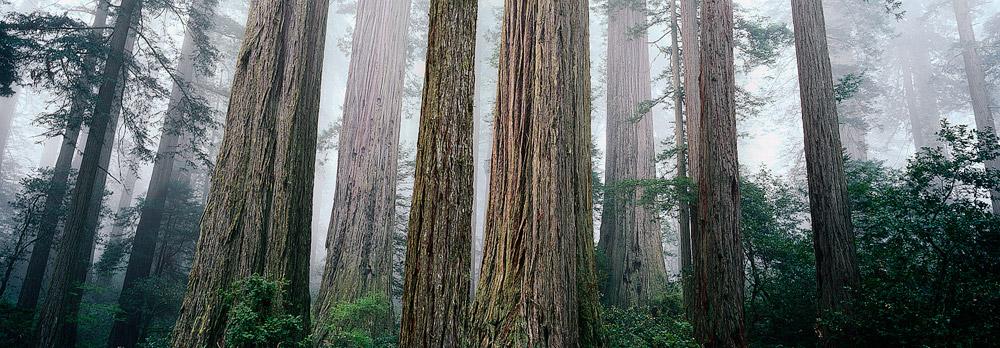 ... Bird Johnson Grove, Orick California. : Grant Ordelheide Photography