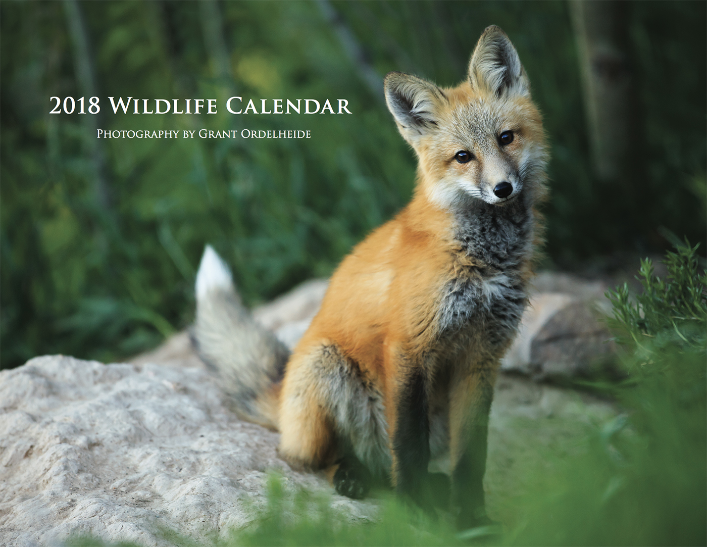 2018, wildlife, calendar, photo
