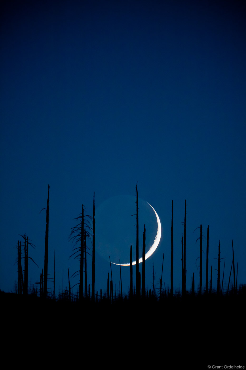crescent, moon, moonset, strand, dead, trees, yosemite, valley, national park, california, use, photo
