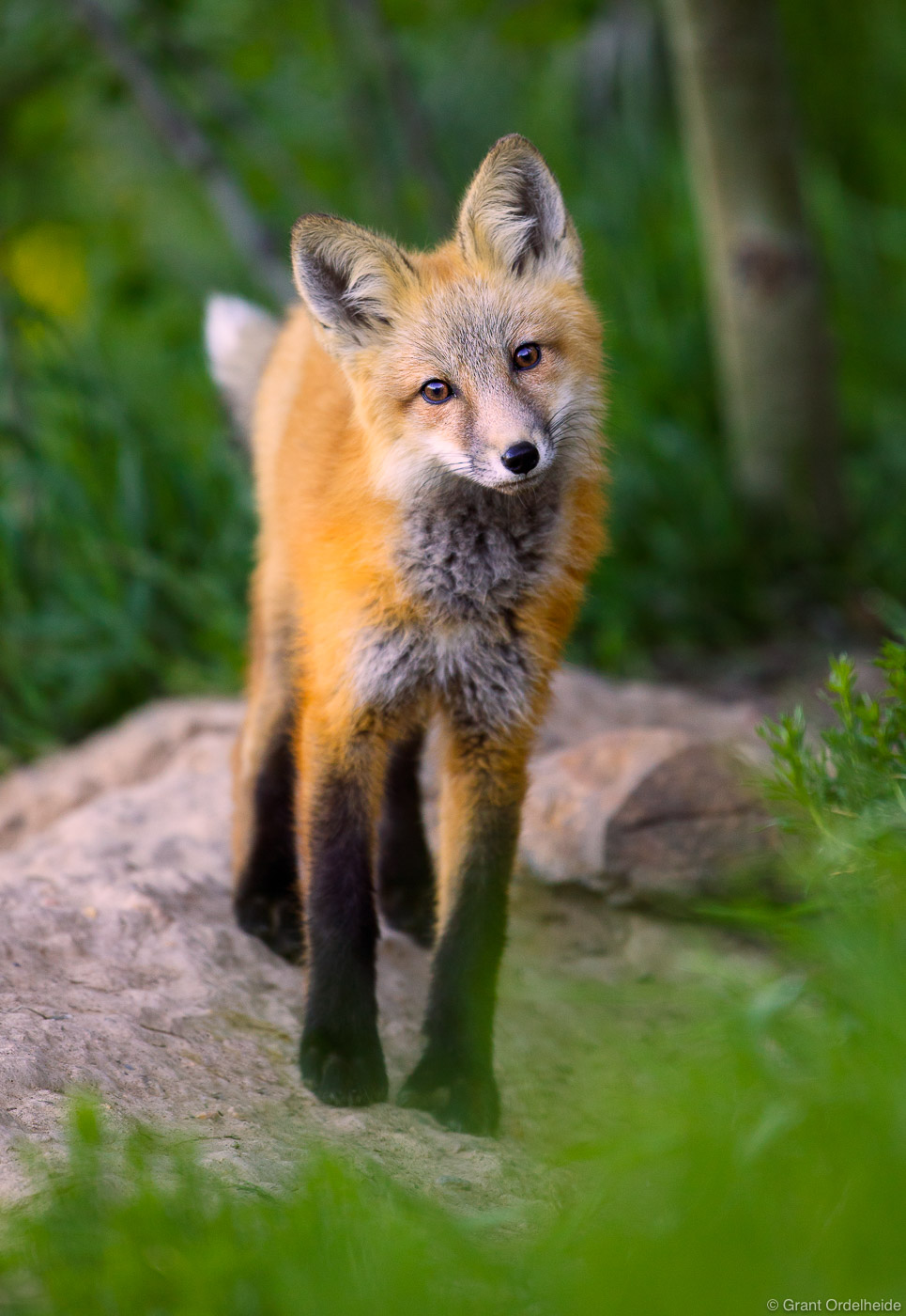 winter, park, fox, colorado, den, town, photo