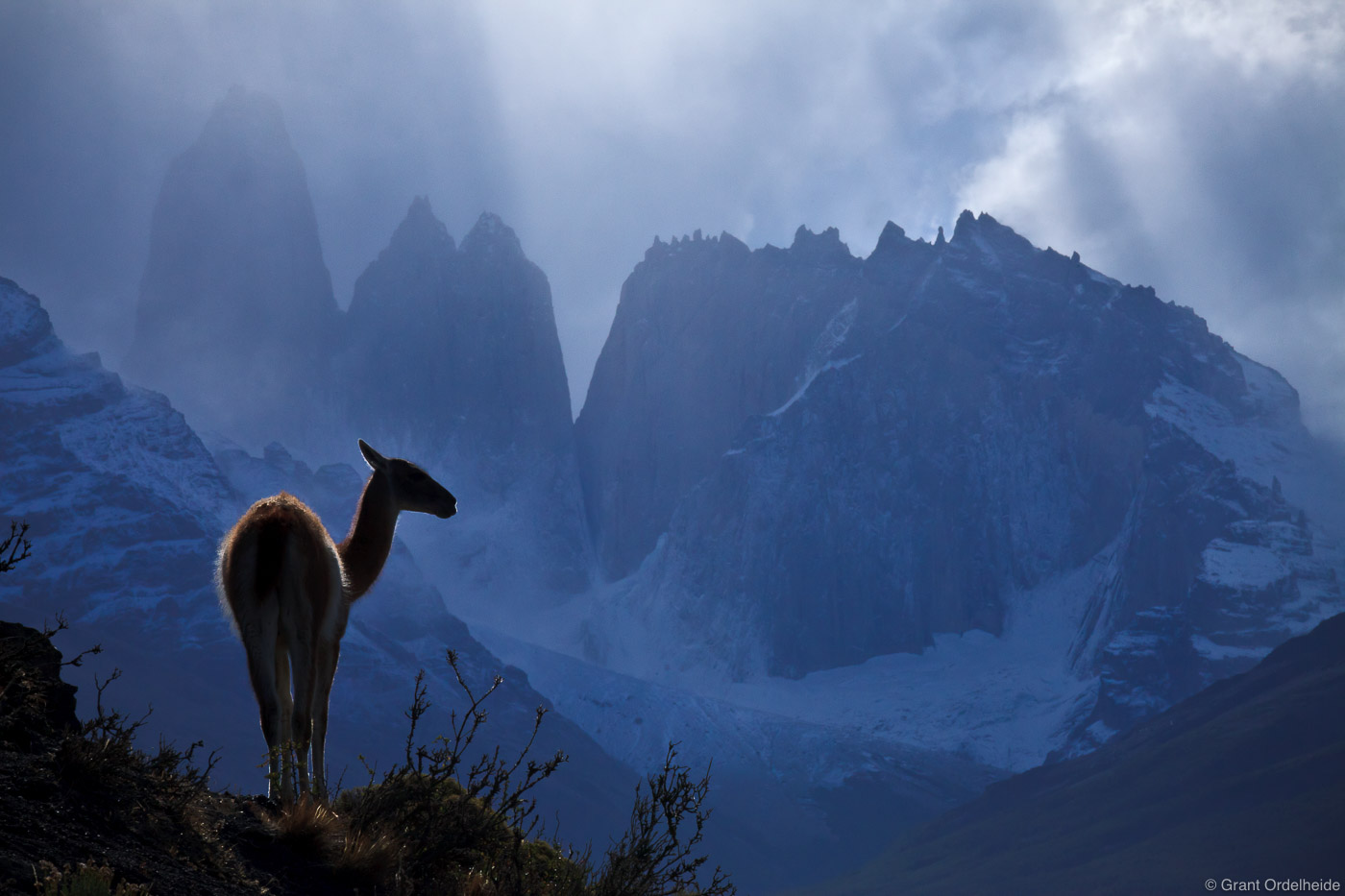 guanaco, torres, loen, stands, ridge, iconic, towers, del, paine, national, park, chile, photo