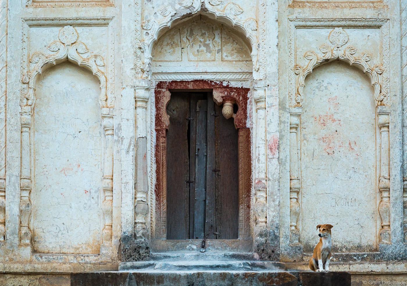temple, dog, khajuraho, india, stray, entrance, lakshmana, photo