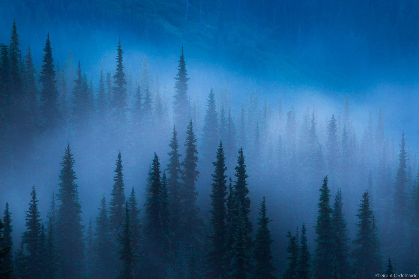 foggy, trees, olympic, national, park, usa, washington, fog, lifts, hurricane, ridge,, photo