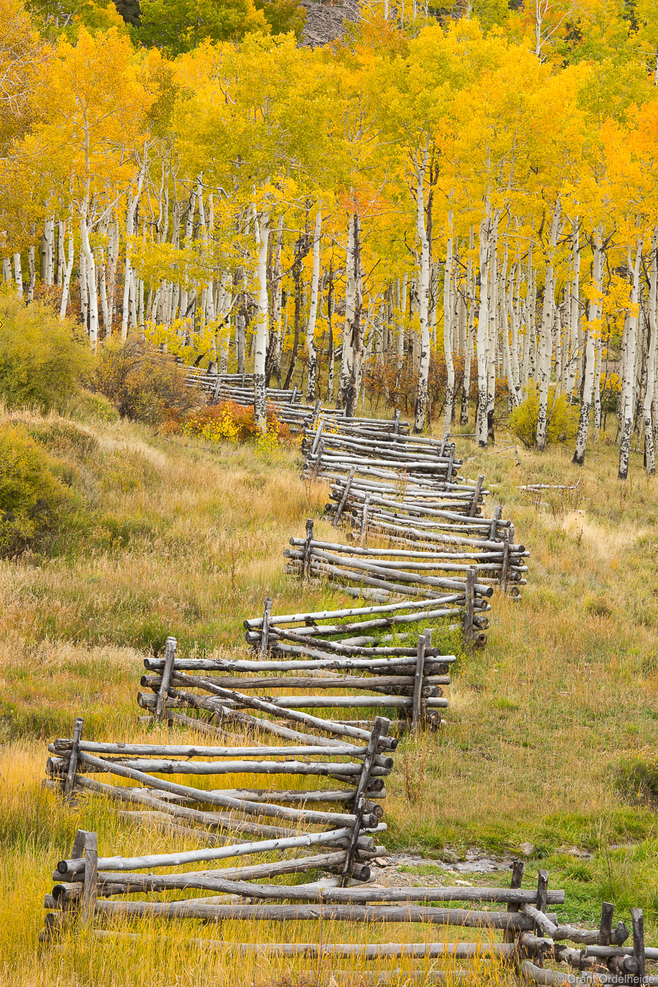 aspen, fence, telluride, colorado, old, split, rail, autumn, photo