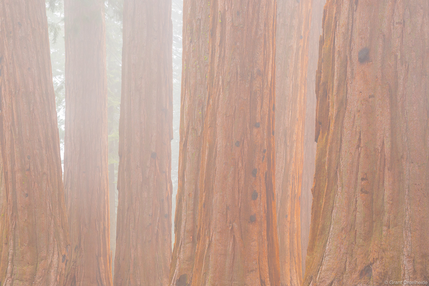 sequoia, fog, kings, canyon, national, park, california, usa, trees