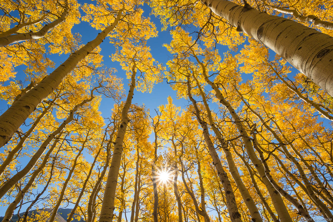 telluride, colorado, usa, aspen, canopy, last, dollar, road, , photo
