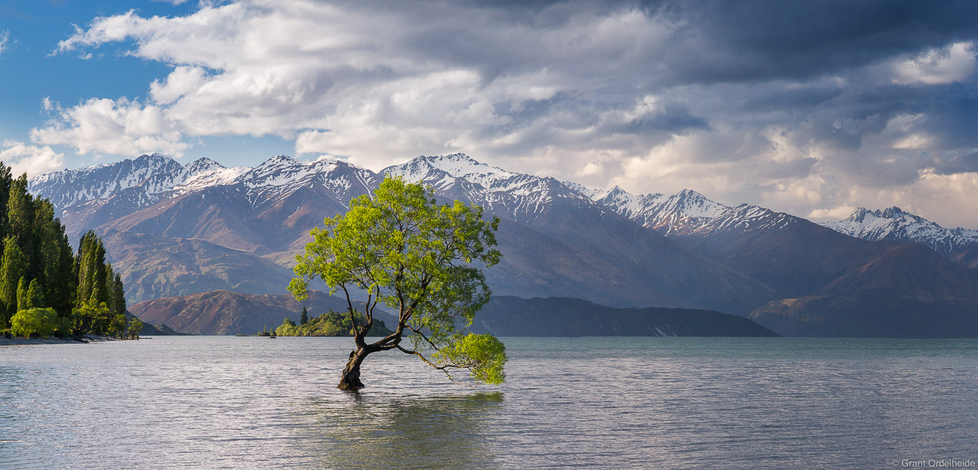wanaka, tree, new, zealand, lone, lake, town, , photo