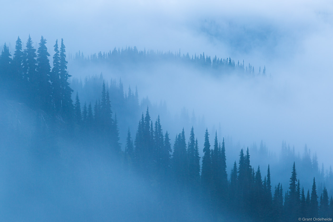 olympic, fog, national, park, washington, usa mist, trees, hurricane, ridge, 