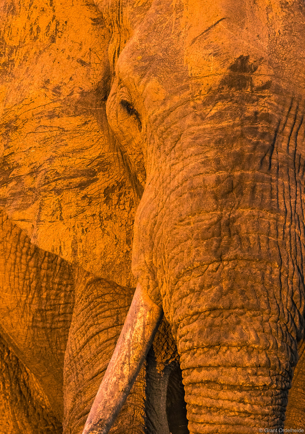 elephant, texture, sabi, sands, south, africa, tight, image, large, mud, covered, game, reserve, , photo