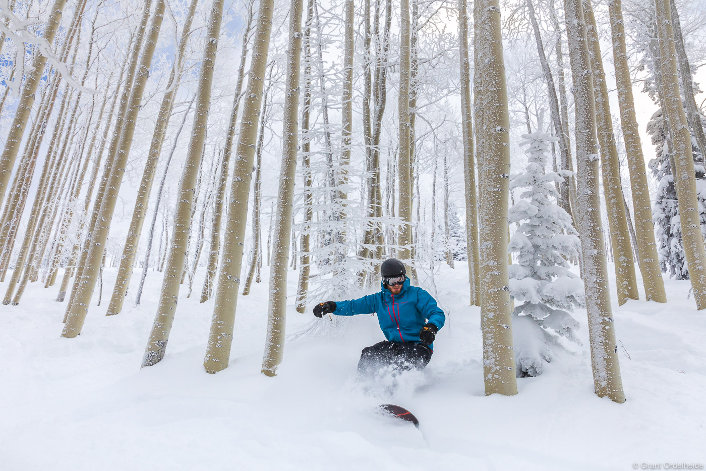 """A male snowboarder enjoys """"Champagne Powder"""" in a grove of aspen trees in Colorado's Steamboat Springs Ski Resort."""