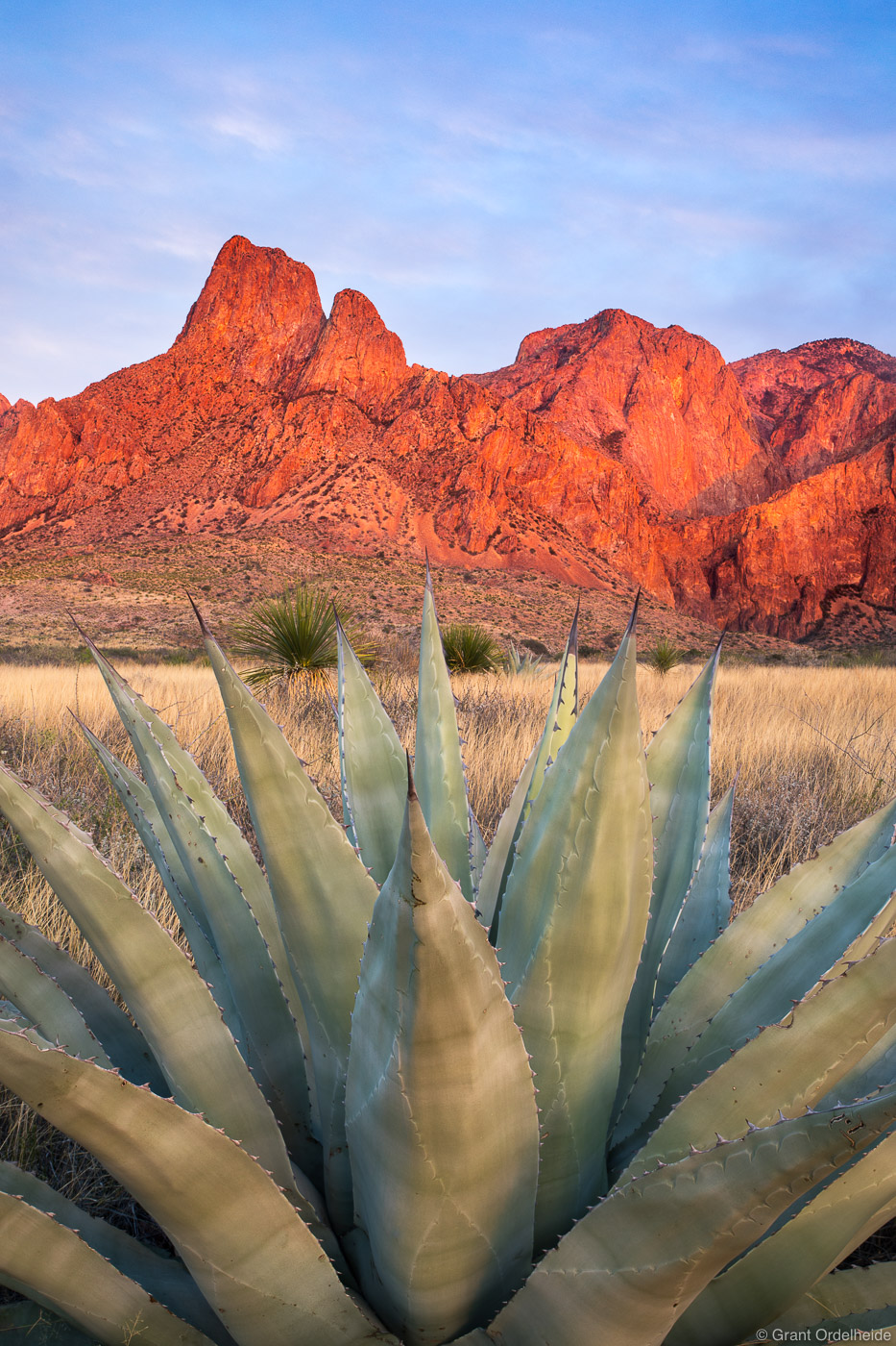 agave, sunset, big, bend, national, park, texas, usa, plant, chisos, mountains, , photo