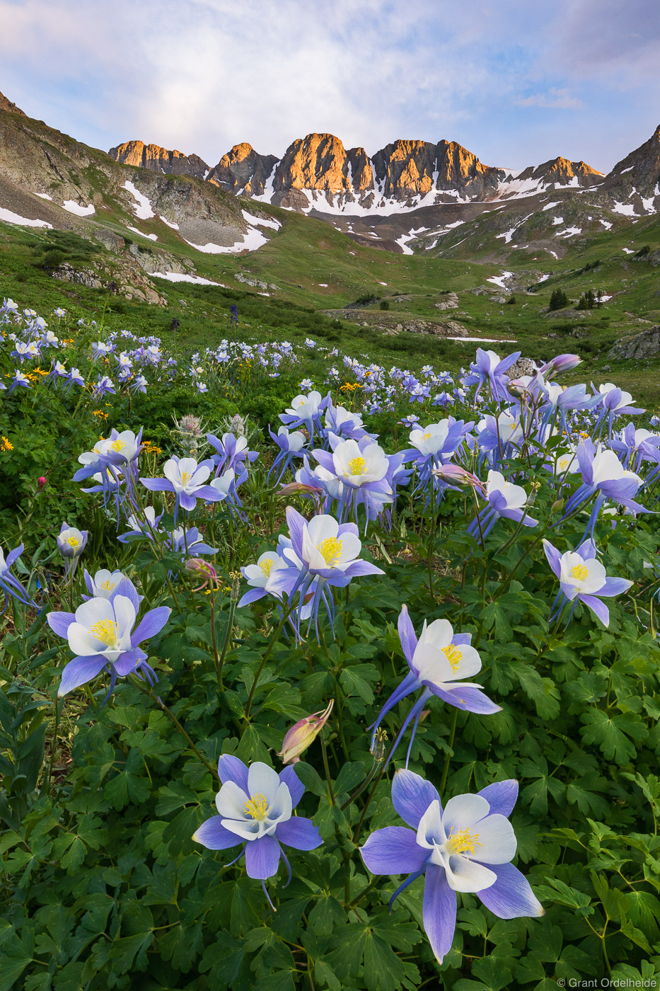 american, basin, columbine, colorado, san, juan, mountain, range, photo