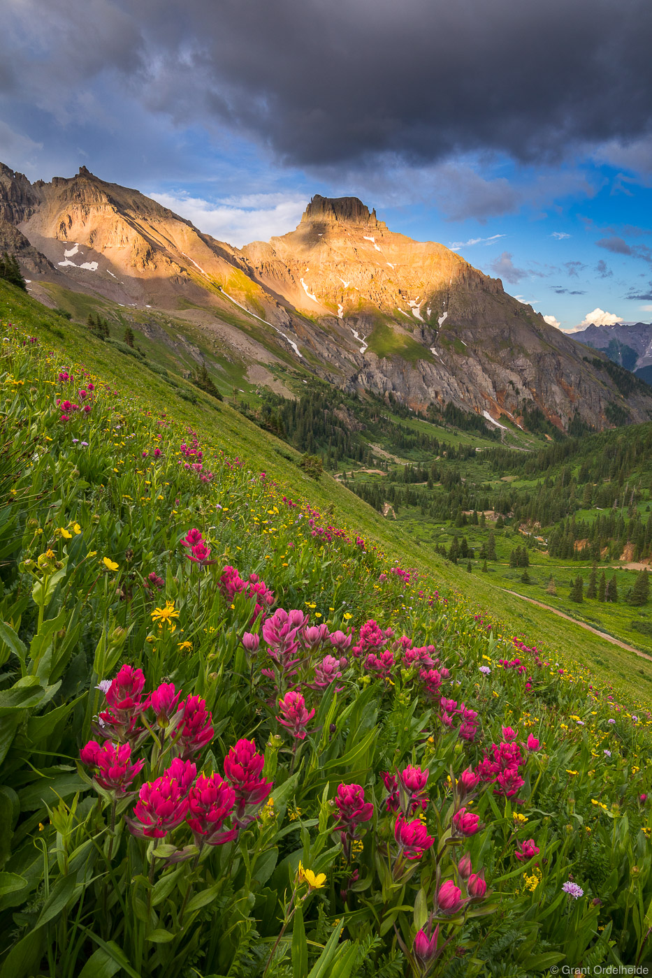 yankee, boy, basin, ouray, colorado, wildflowers, high, apline, photo