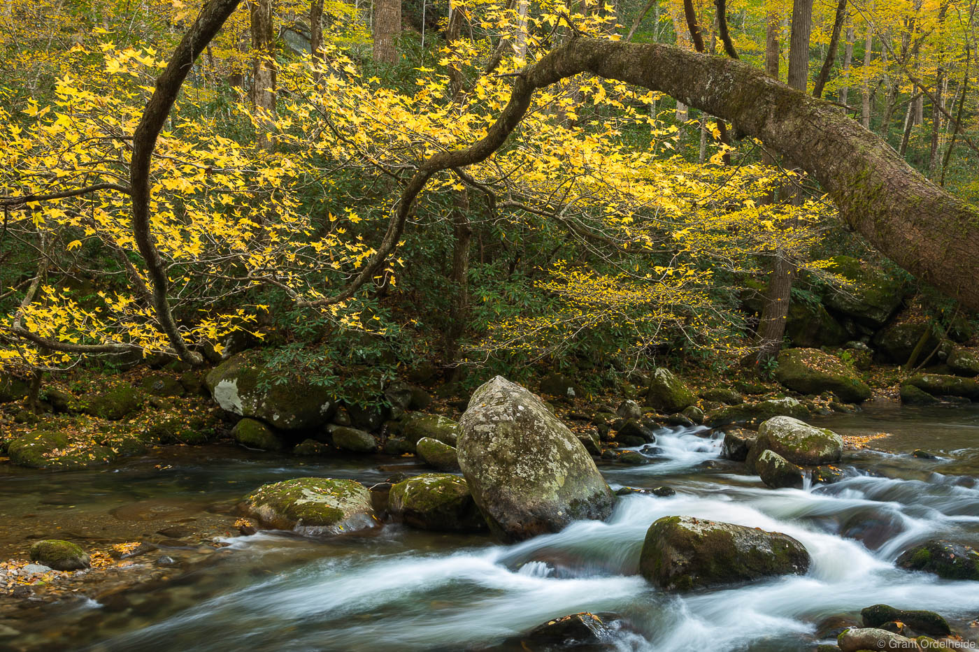 reaching, branches, great, smoky, mountains, national, park, tennessee, tree, branching, river,, photo