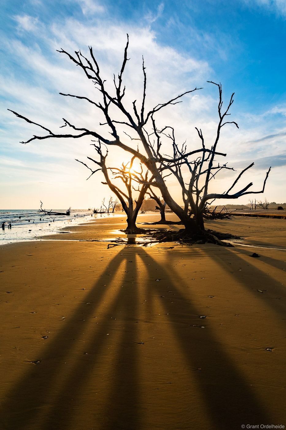 beach, skeletons, edisto, island, south carolina, dead, trees, , photo