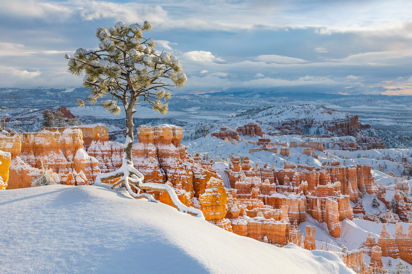 tree, bryce, canyon, national, park, utah, morning, light, fresh, snow, storm, photo